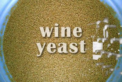Wine Yeast